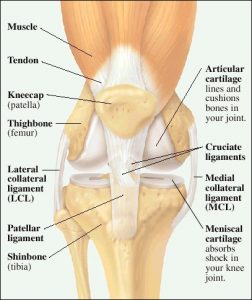 Patella Knee Pain, exercise, and massage