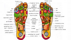 massage school lekki reflexology of the leg